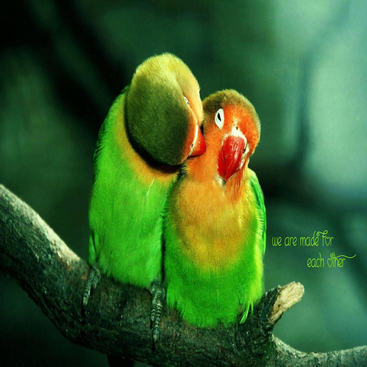Love Birds wallpaper by Happy_Cool - dc ...