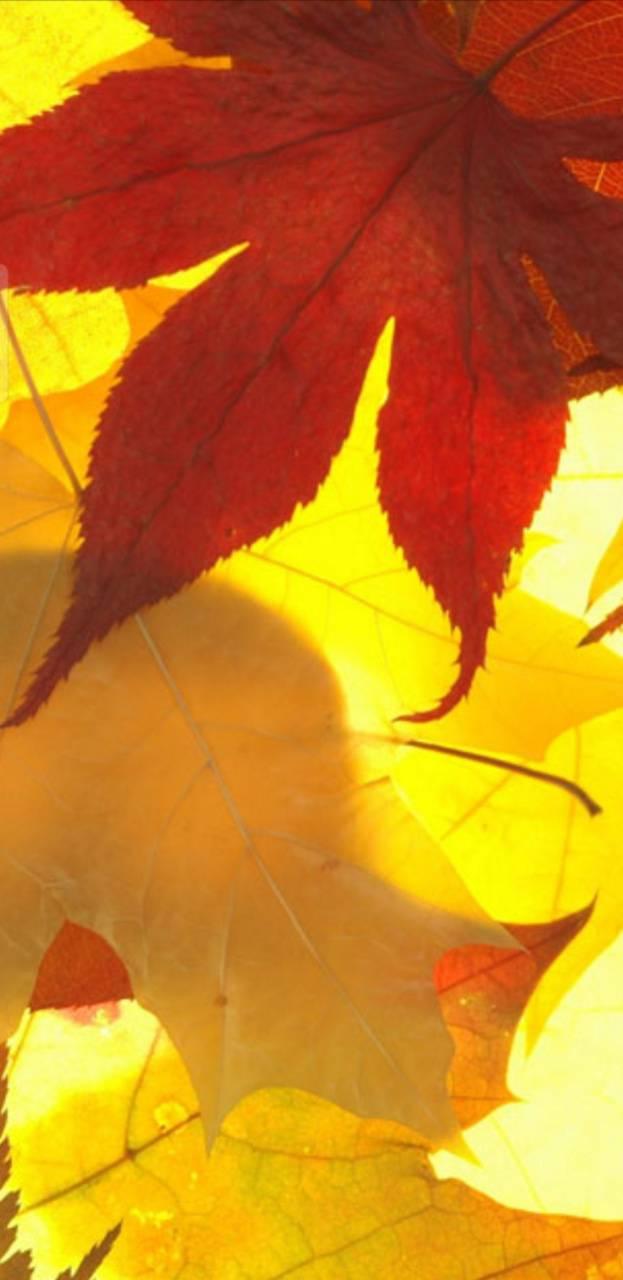 Symbian leaves