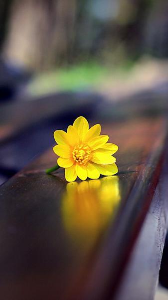 flower on bench