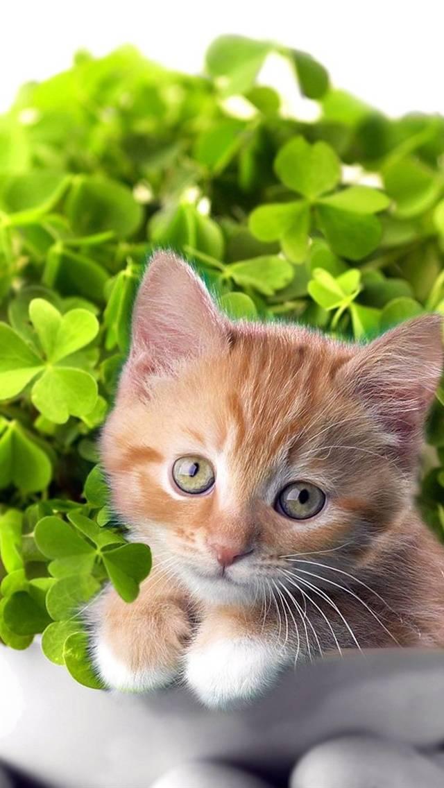 Kitten with Bonsai