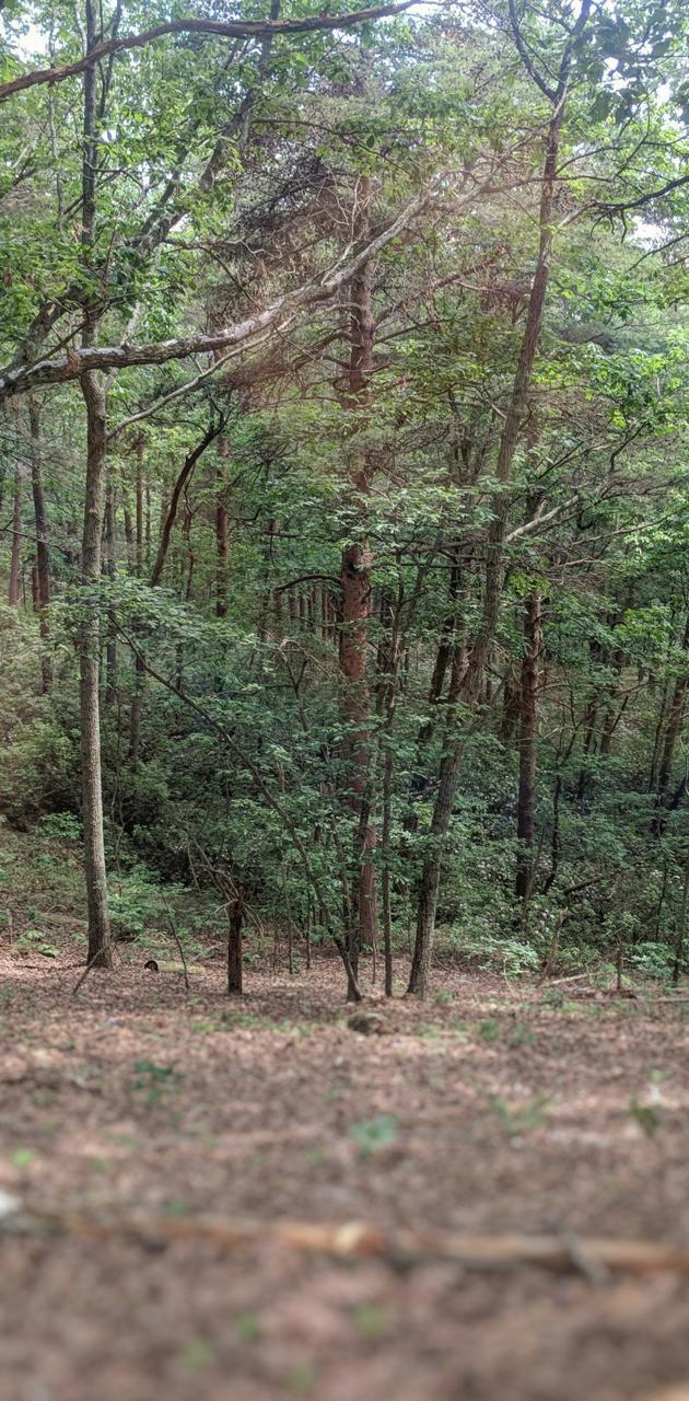 Gorgeia Forest