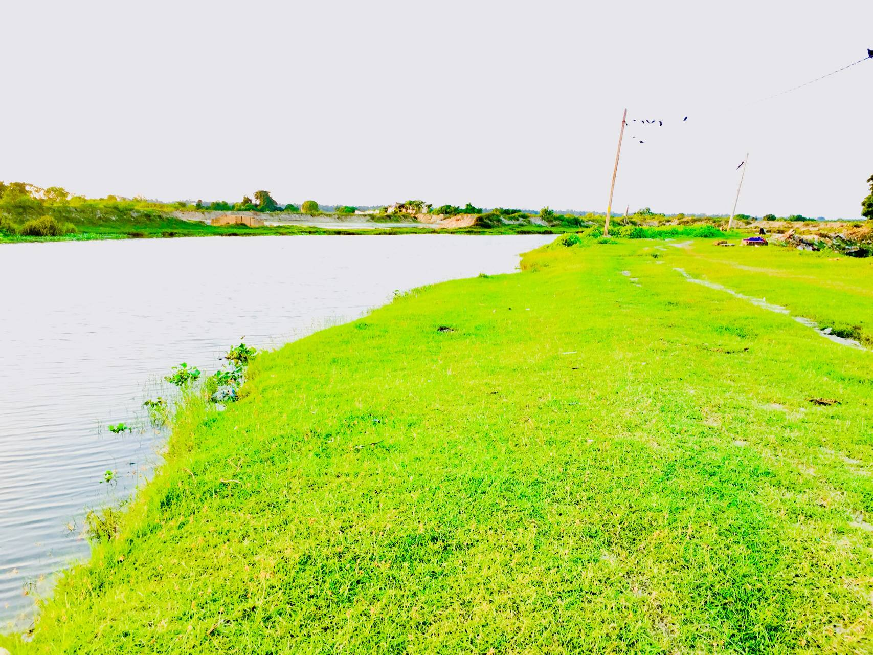 Grass with river