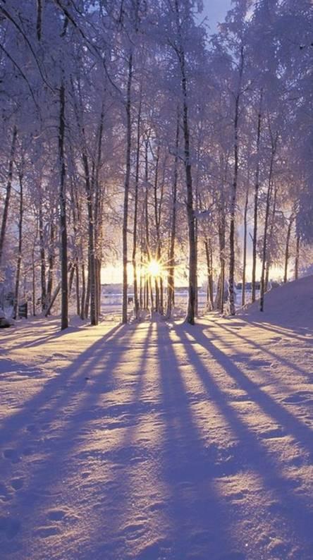 Winter Sunset Alaska
