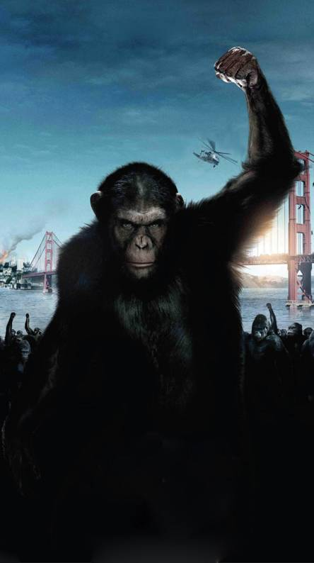 Ape Ringtones And Wallpapers Free By Zedge