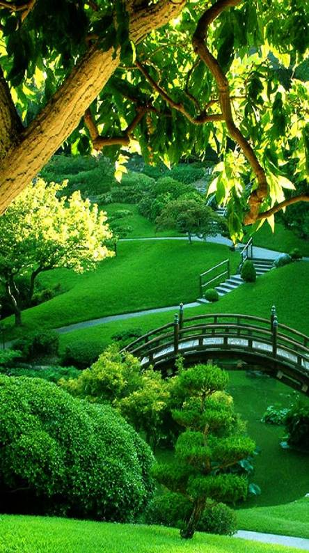 nature-----------