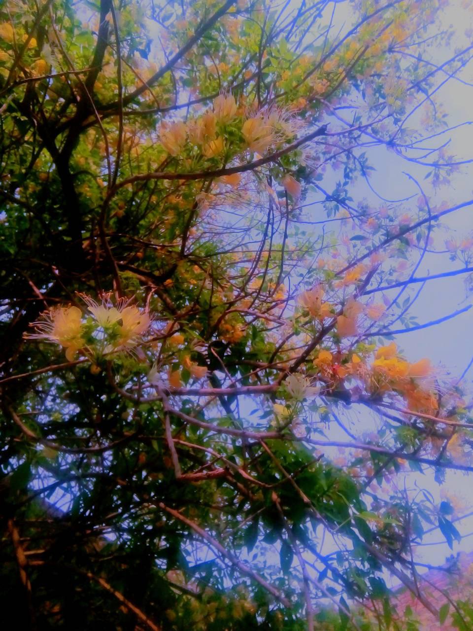 Tree n leaves