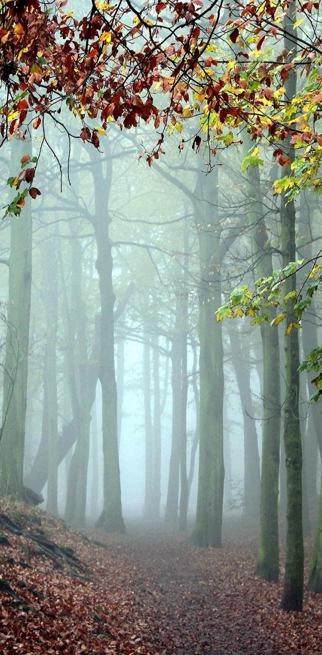 Mystic Fog Forest