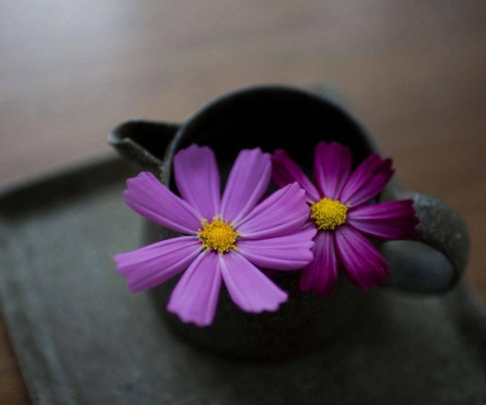 Flowers Kettle Hd