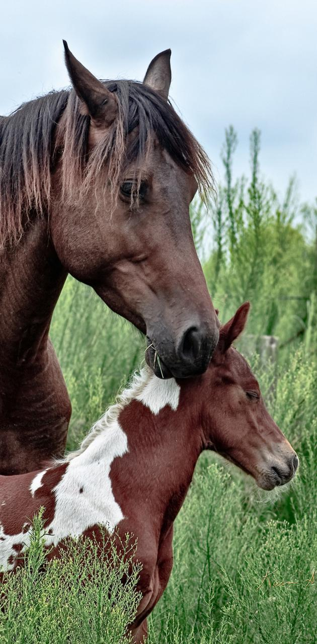 BSI Mother And Foal