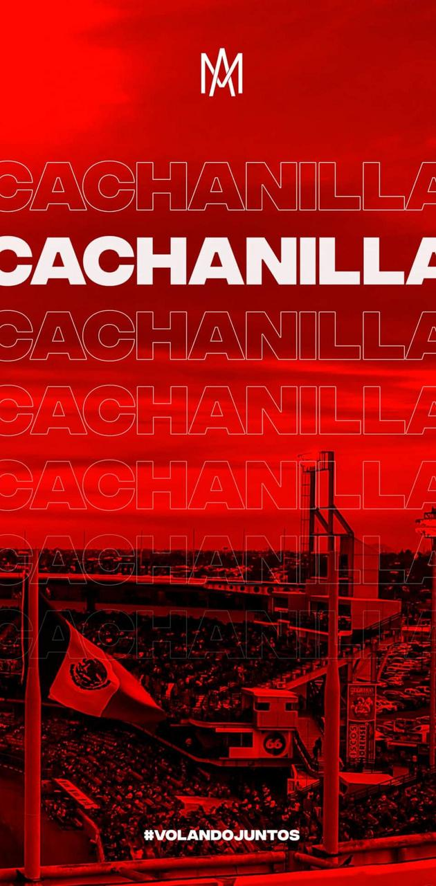 Cachanilla