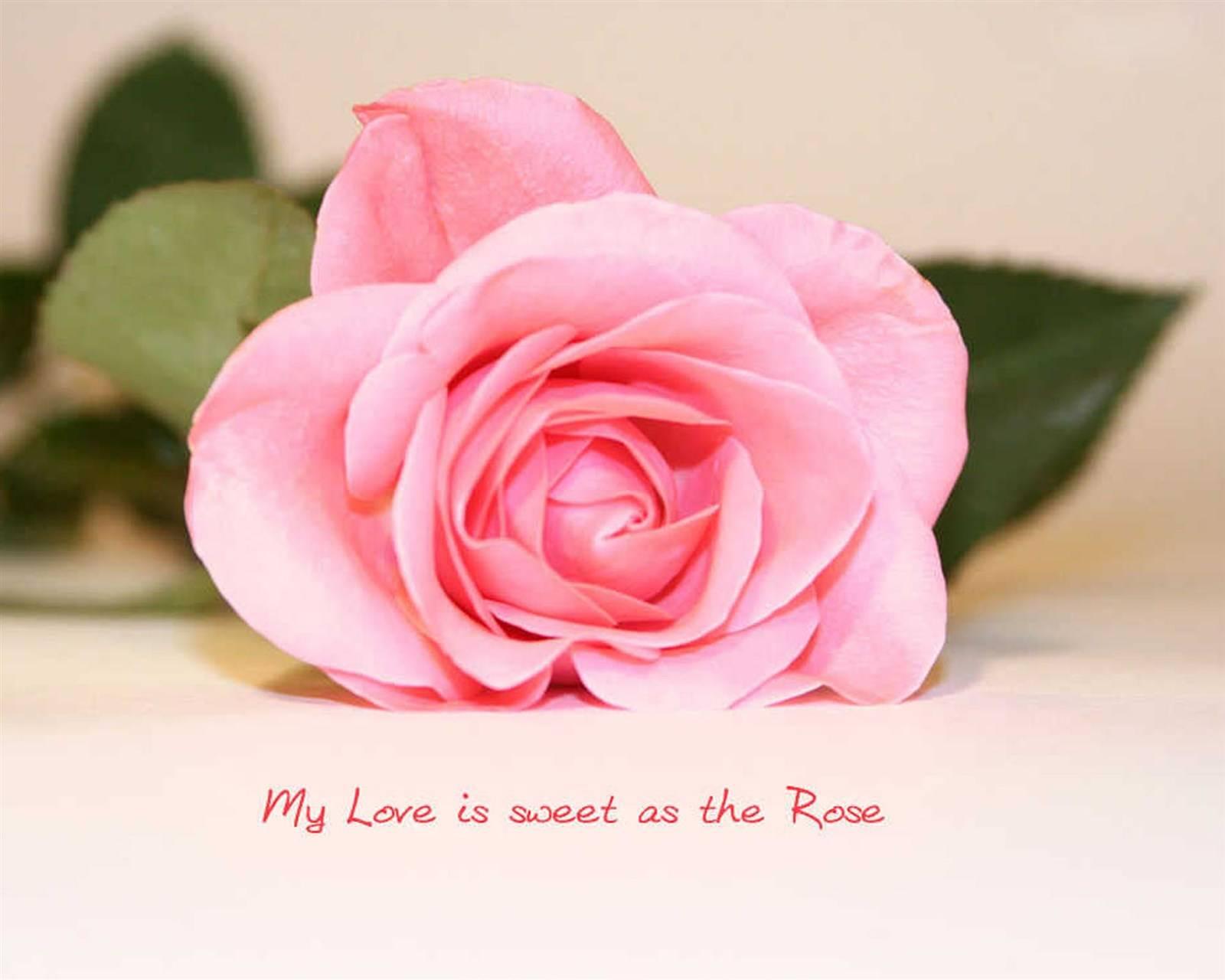 My Love