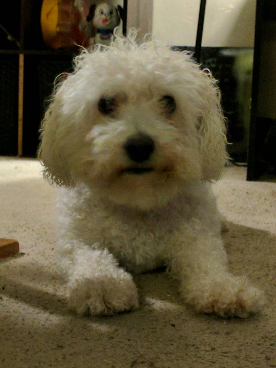 Sweet Pupper