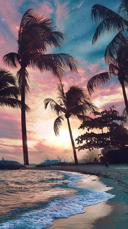 Beach Palms Sunset