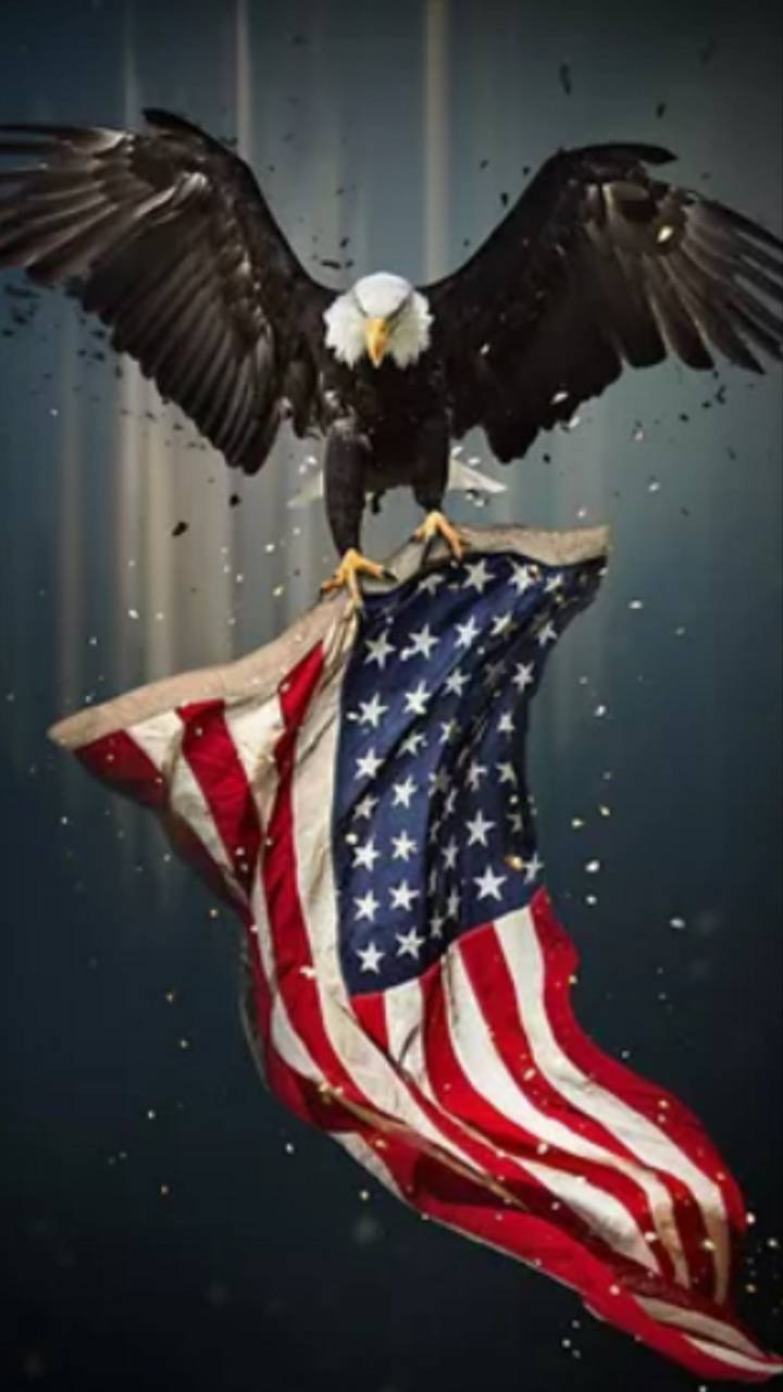 American Eagle Wallpaper By Jp91200598073 23 Free On Zedge