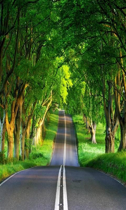 Greeny Way
