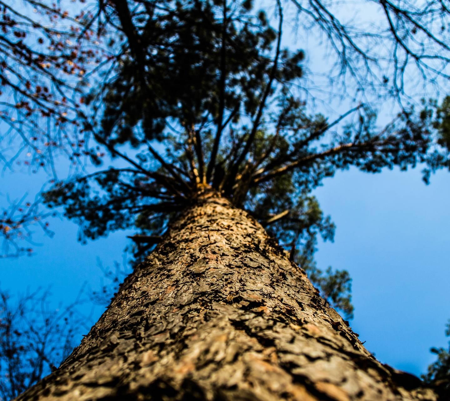 nature wood