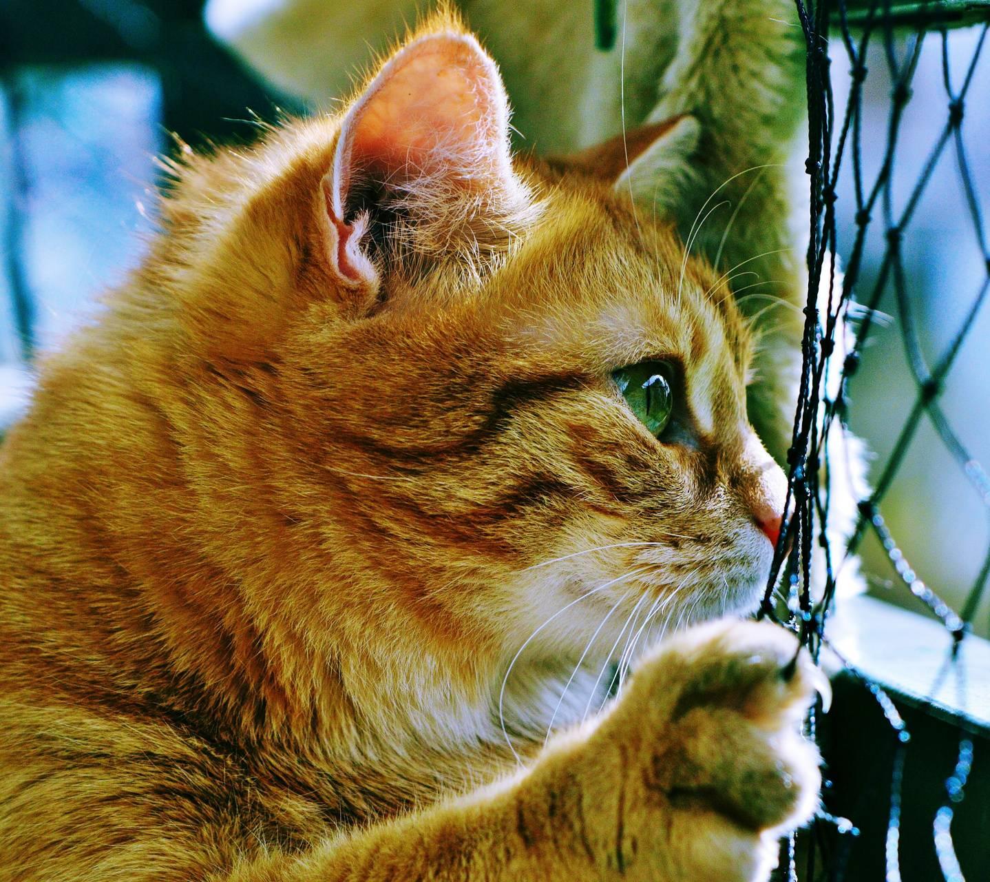Cat Hope