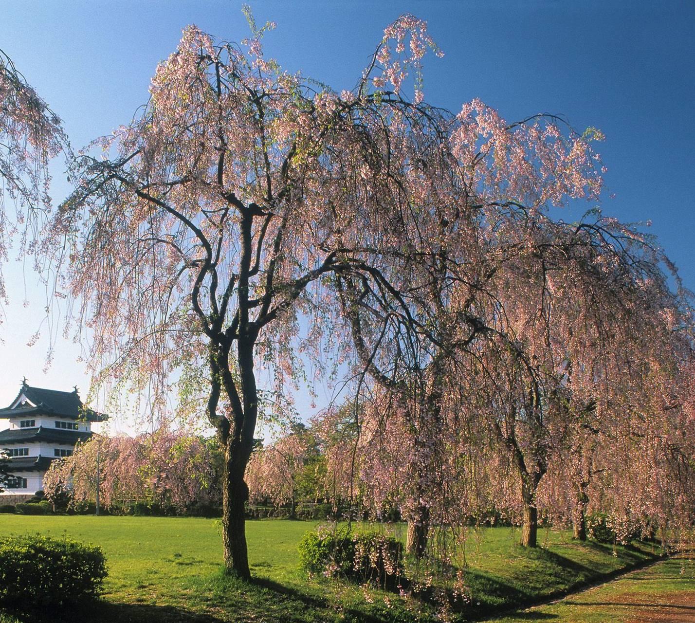 Nature Tree1