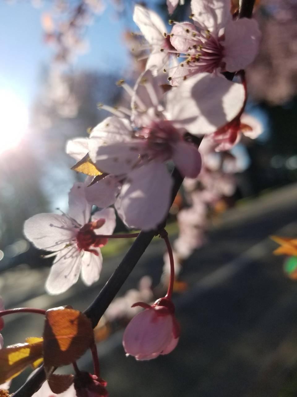 Flower Springs