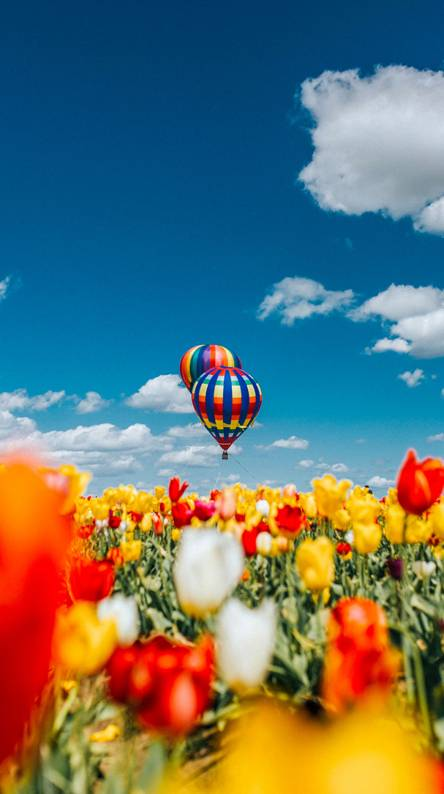 Baloons and flowers
