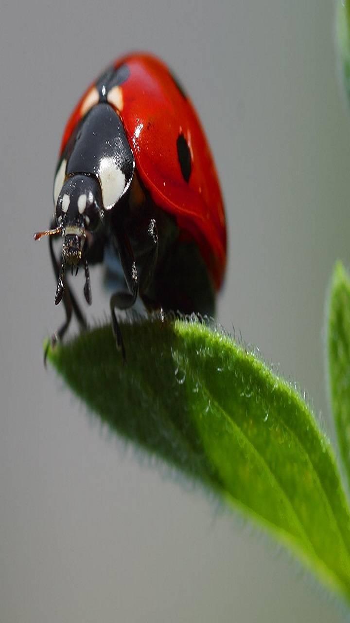 Ladybug 2