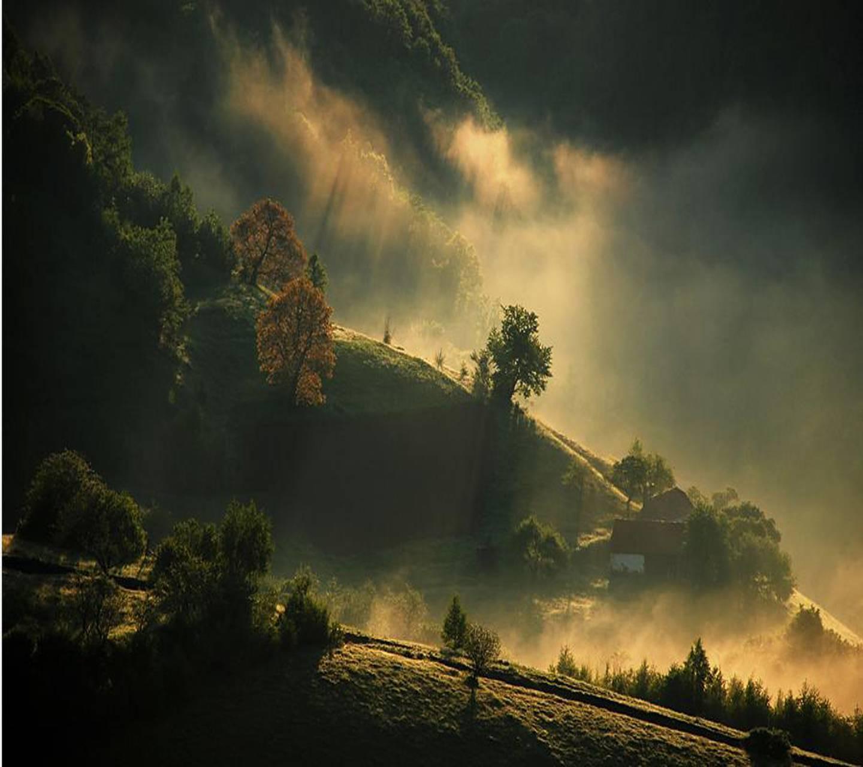 Natures Requiem