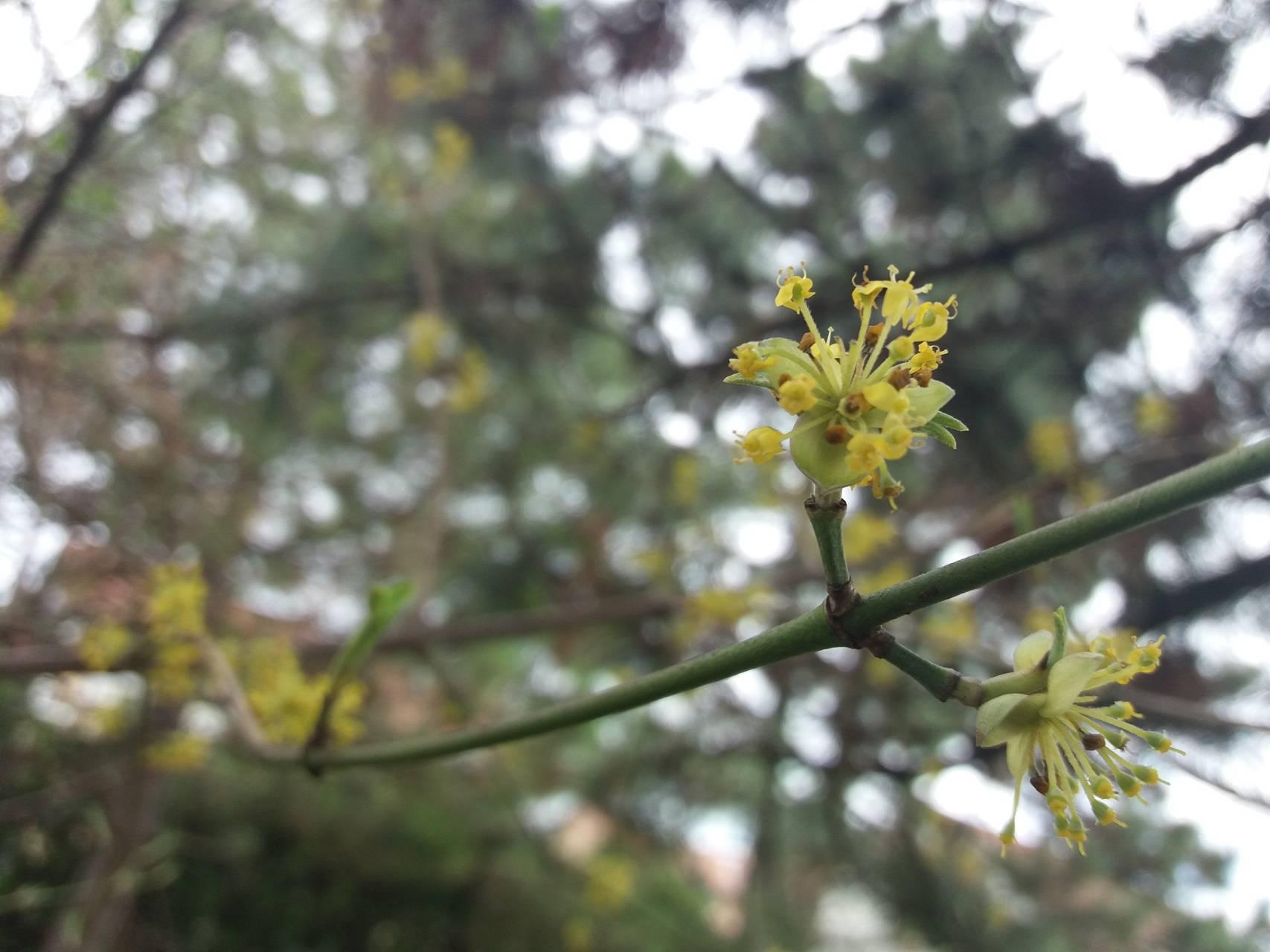 Violet Flower Tree