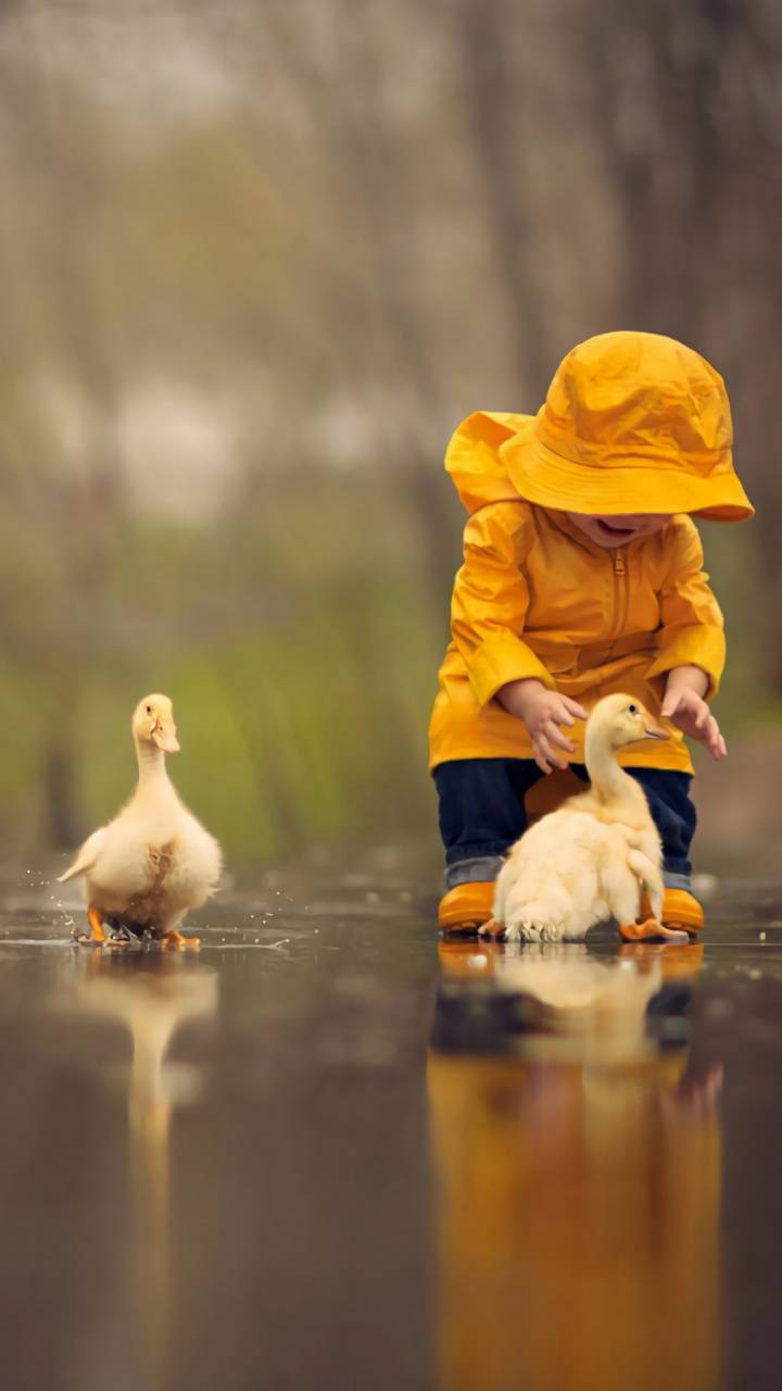 gosling in puddle