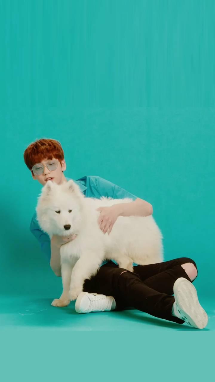 CAT AND DOG MV TXT 3