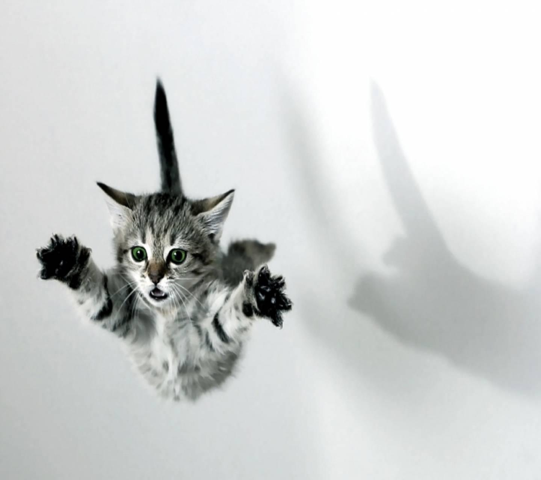 Flying Kitty