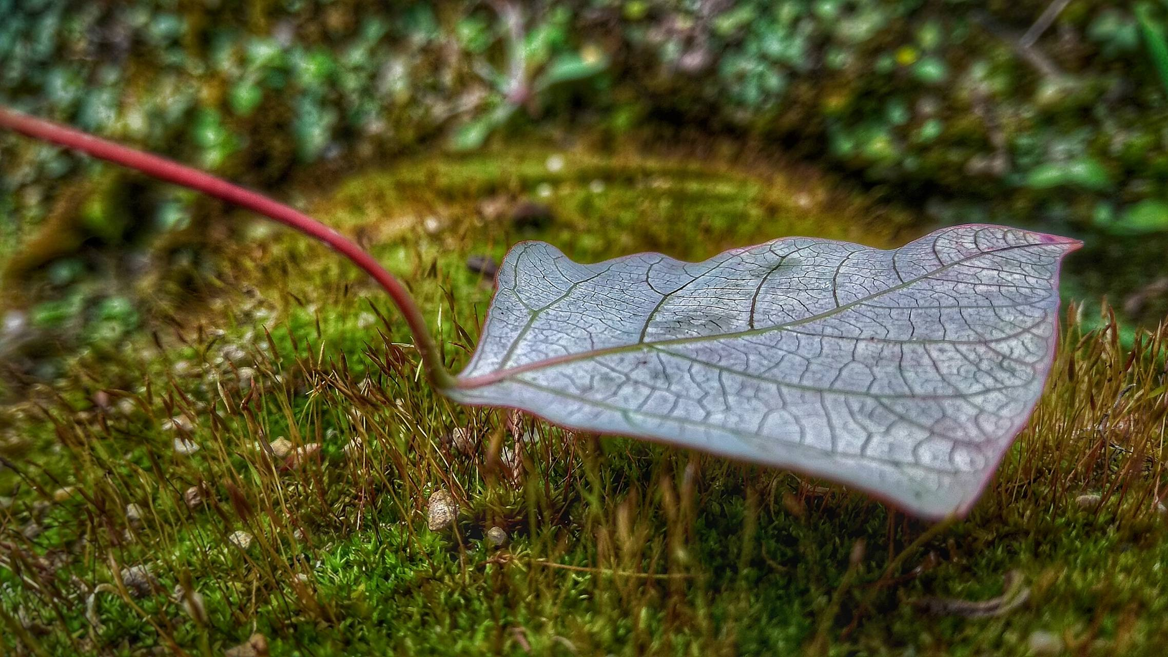 Leaf called life