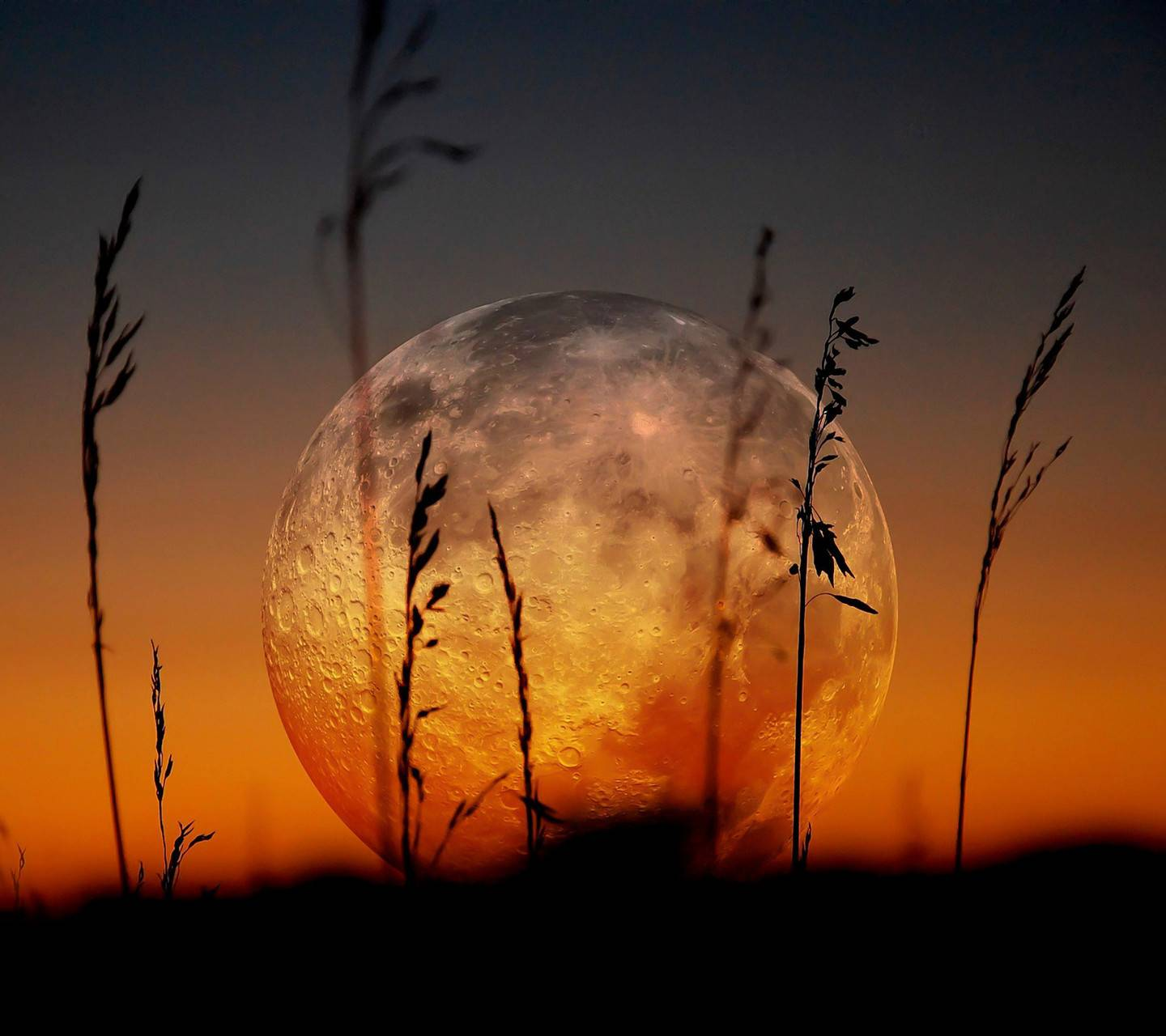 Full Moon and Grass