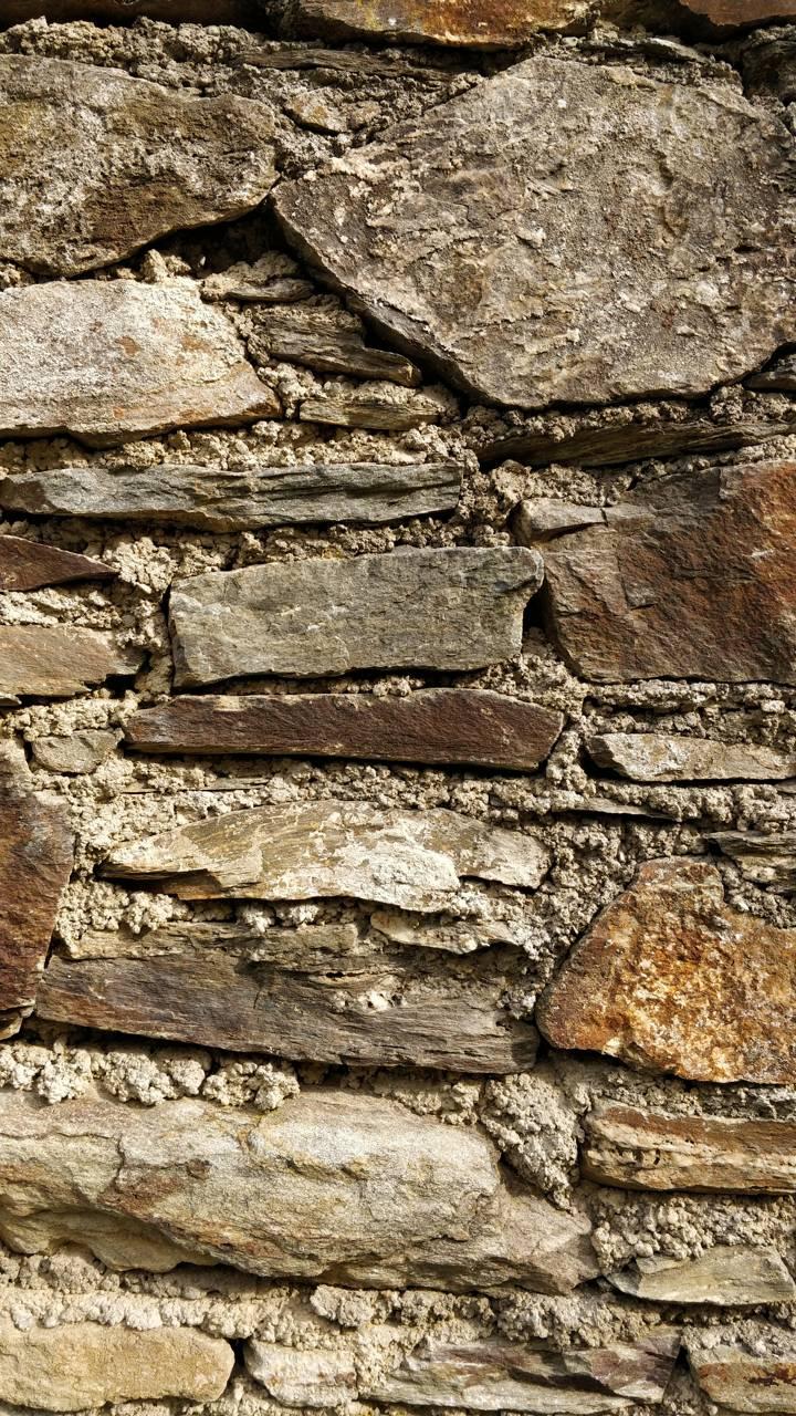 Stone shotononeplus