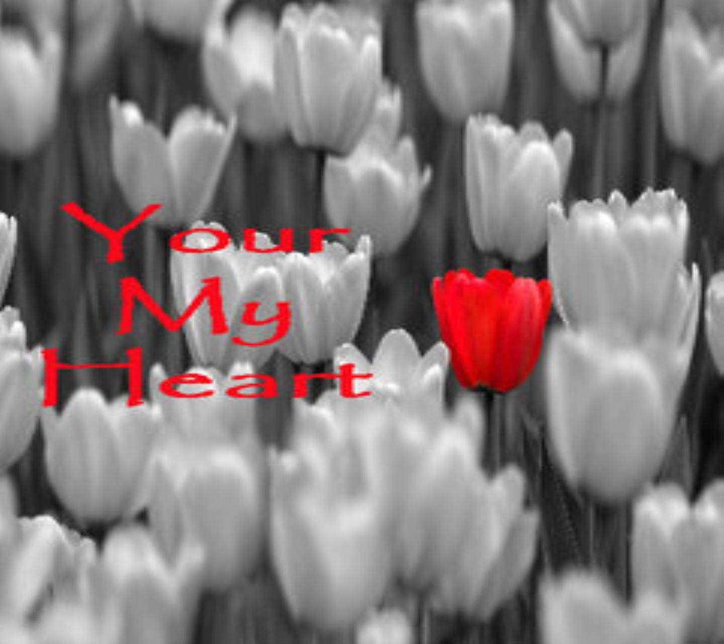 Your My Heart