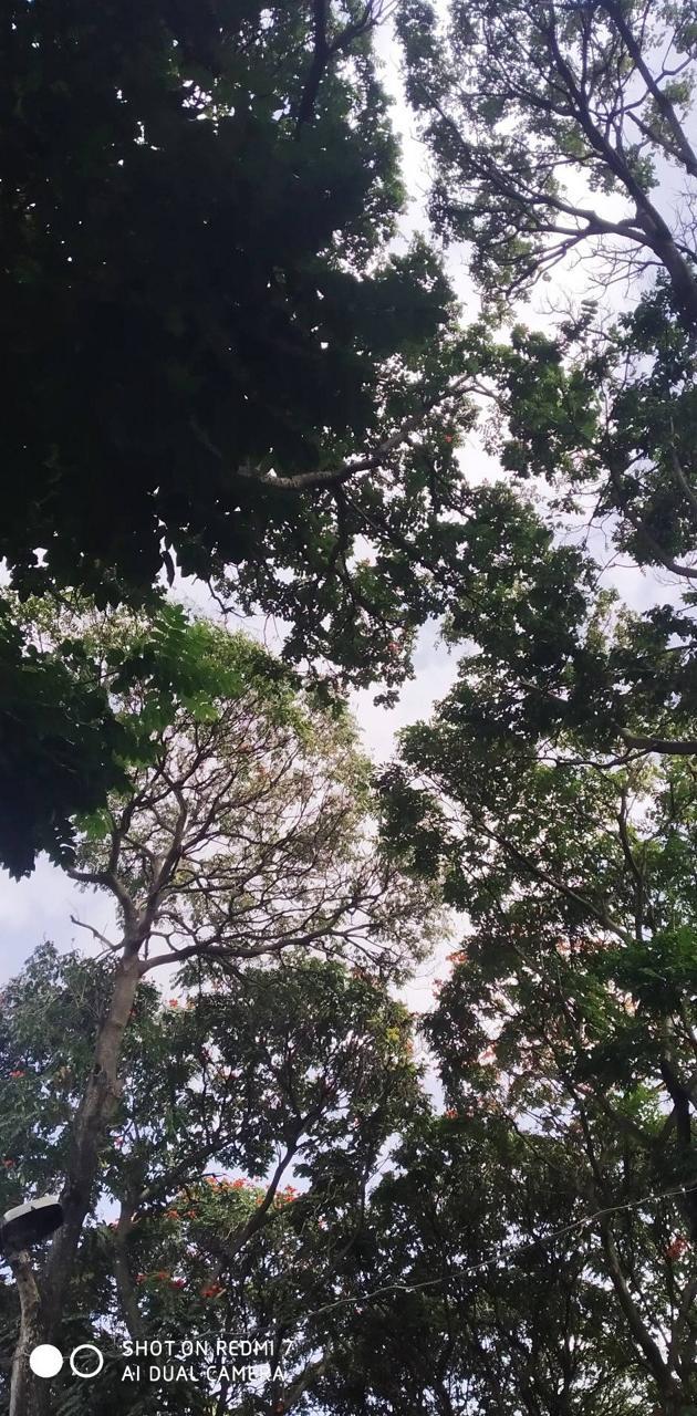 greenry banglore