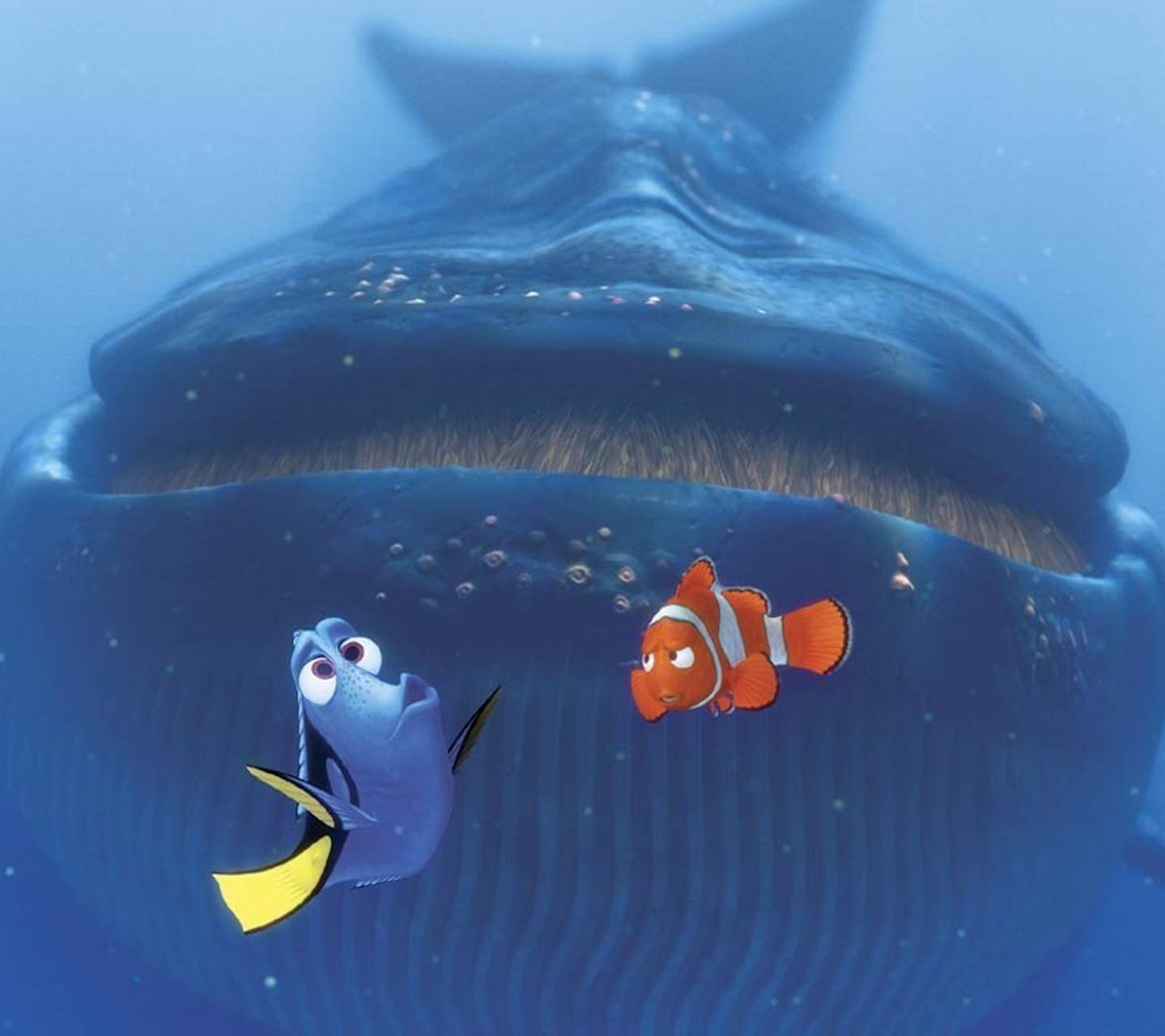 Finding Nemo - Whale