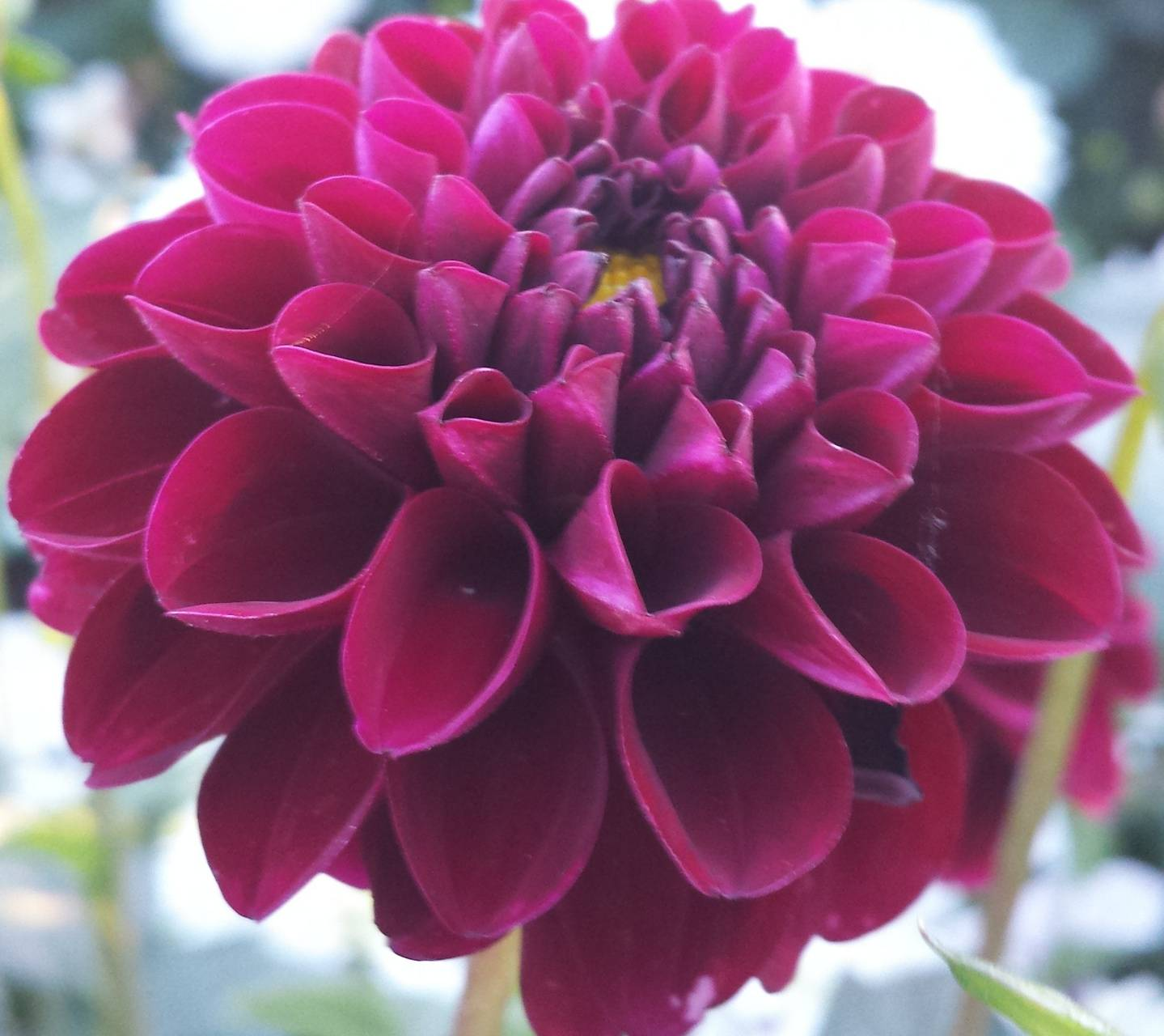 HD Flower