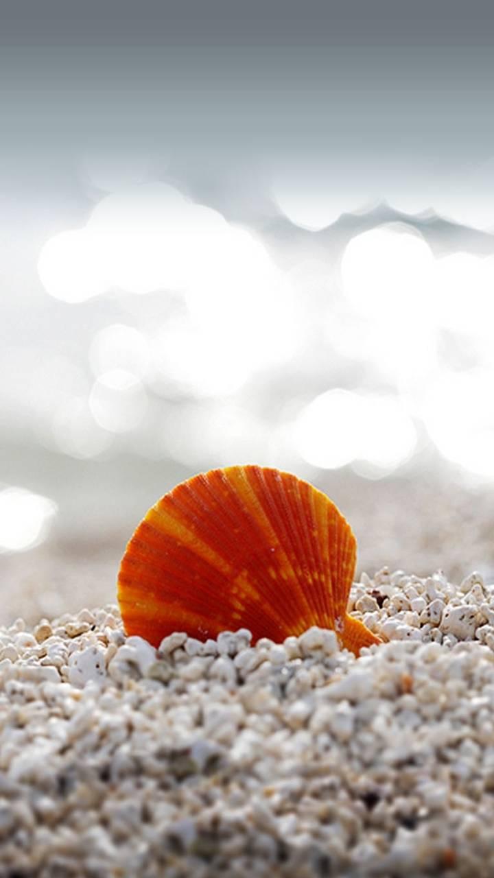 hd sea shell