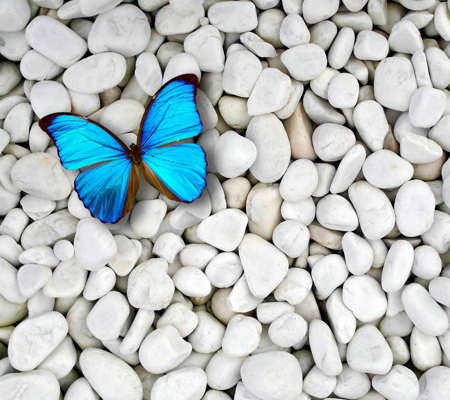 Butterfly On Stones