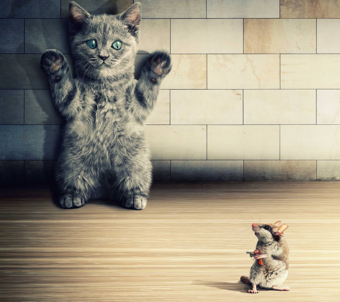 Cat and Mice