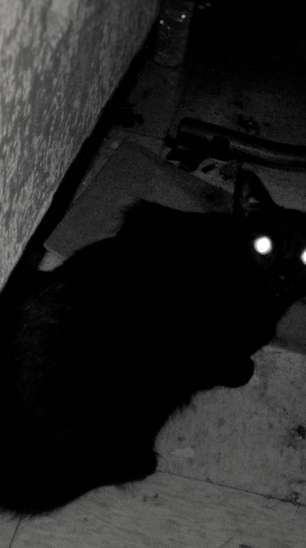cat crying horror ringtone