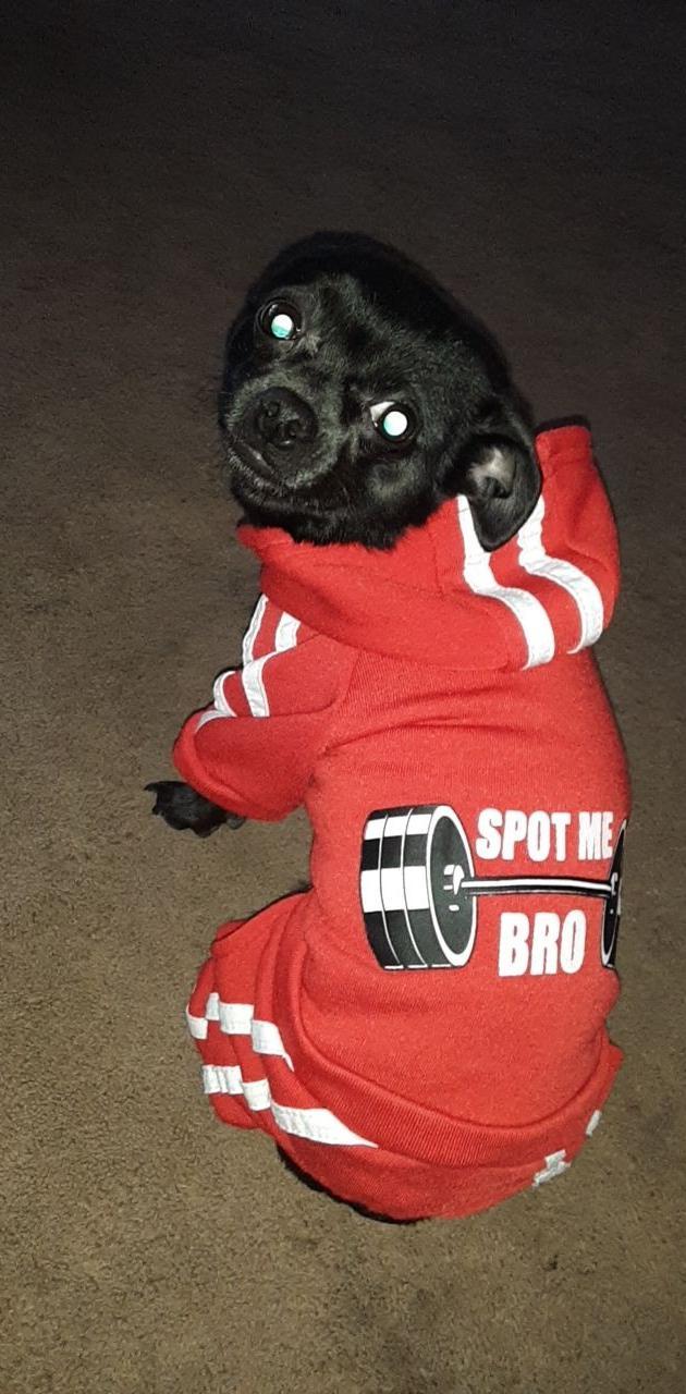Workout dog