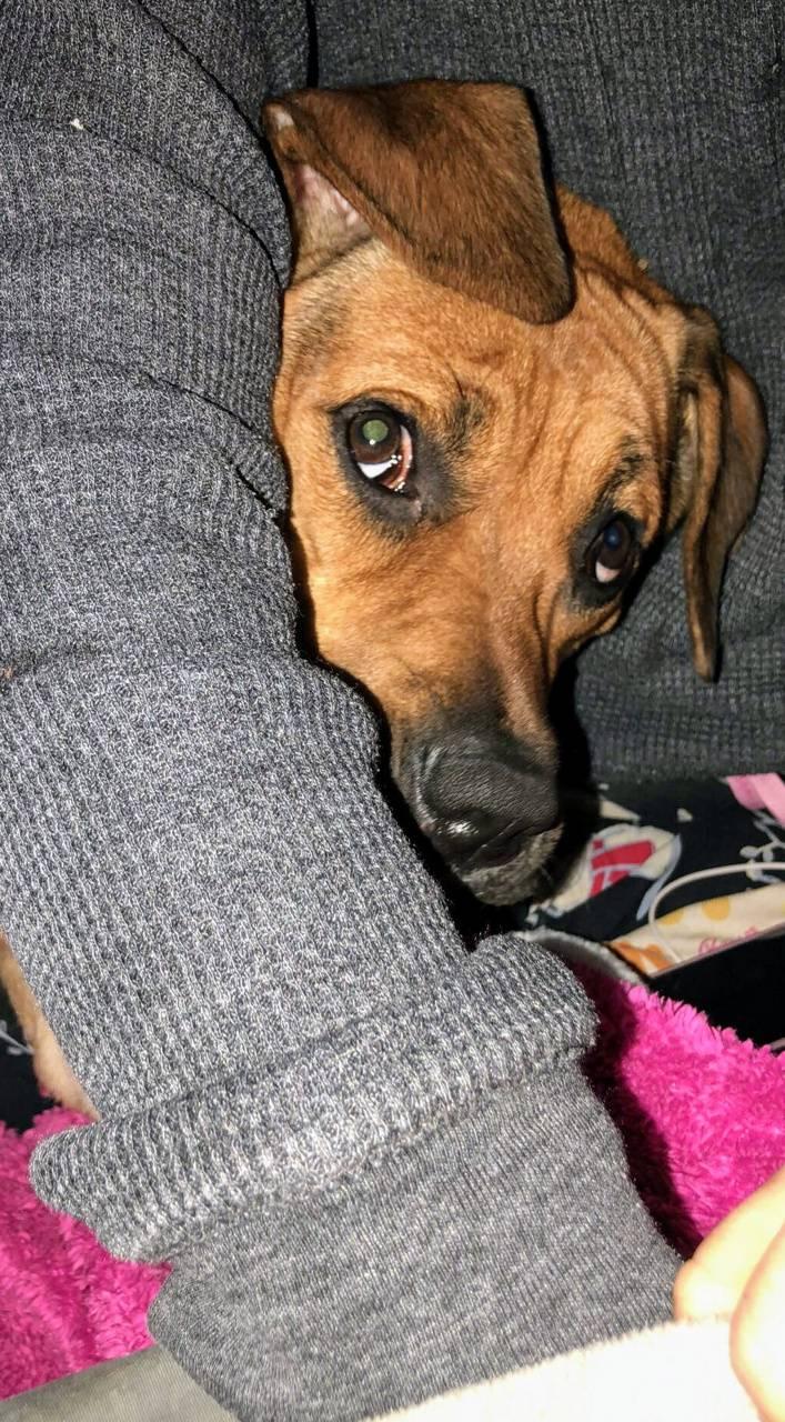 Cute puppy photo opp