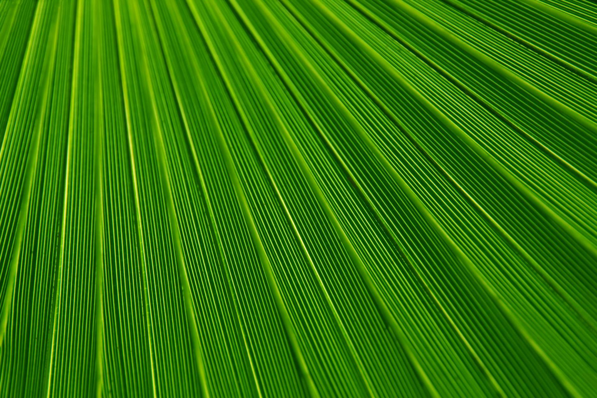Abstract Green Leaf