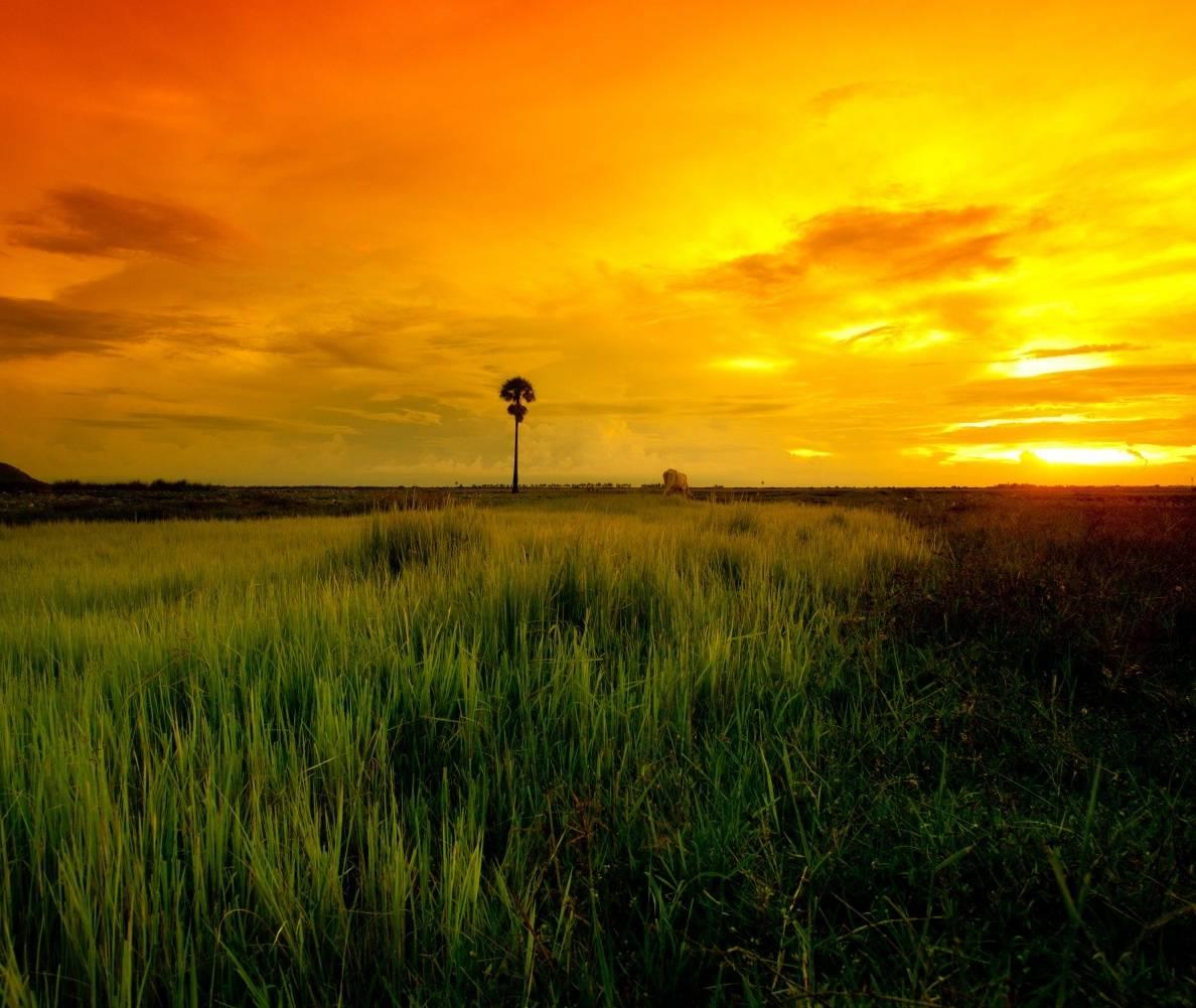 Yellow Sun Set