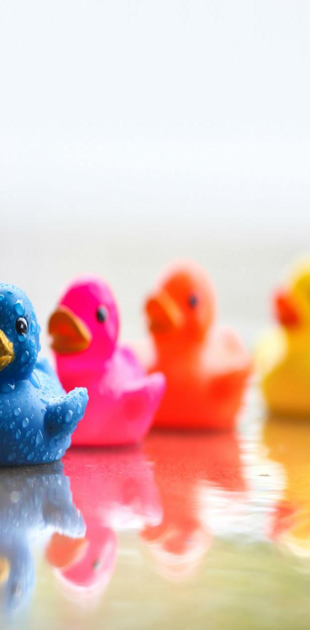 Cute Ducklings HD