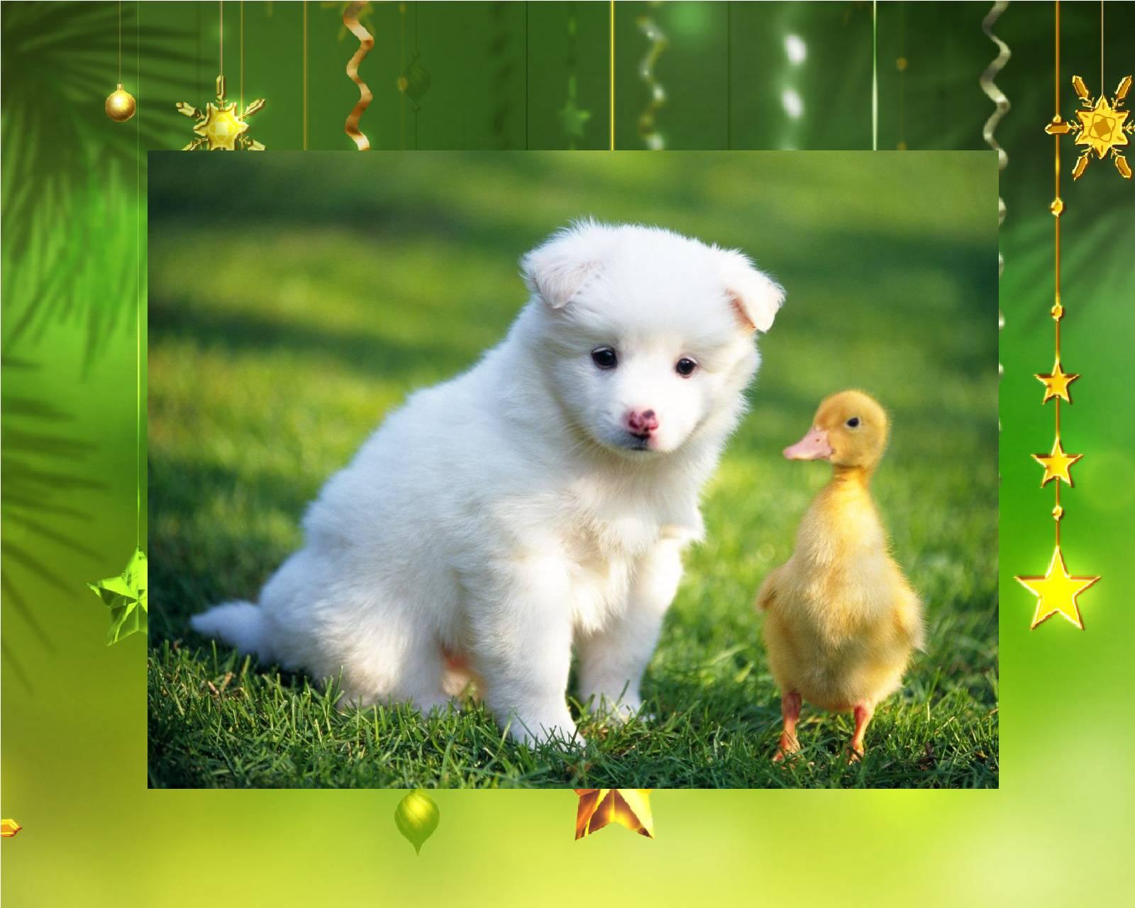 U really are a quack