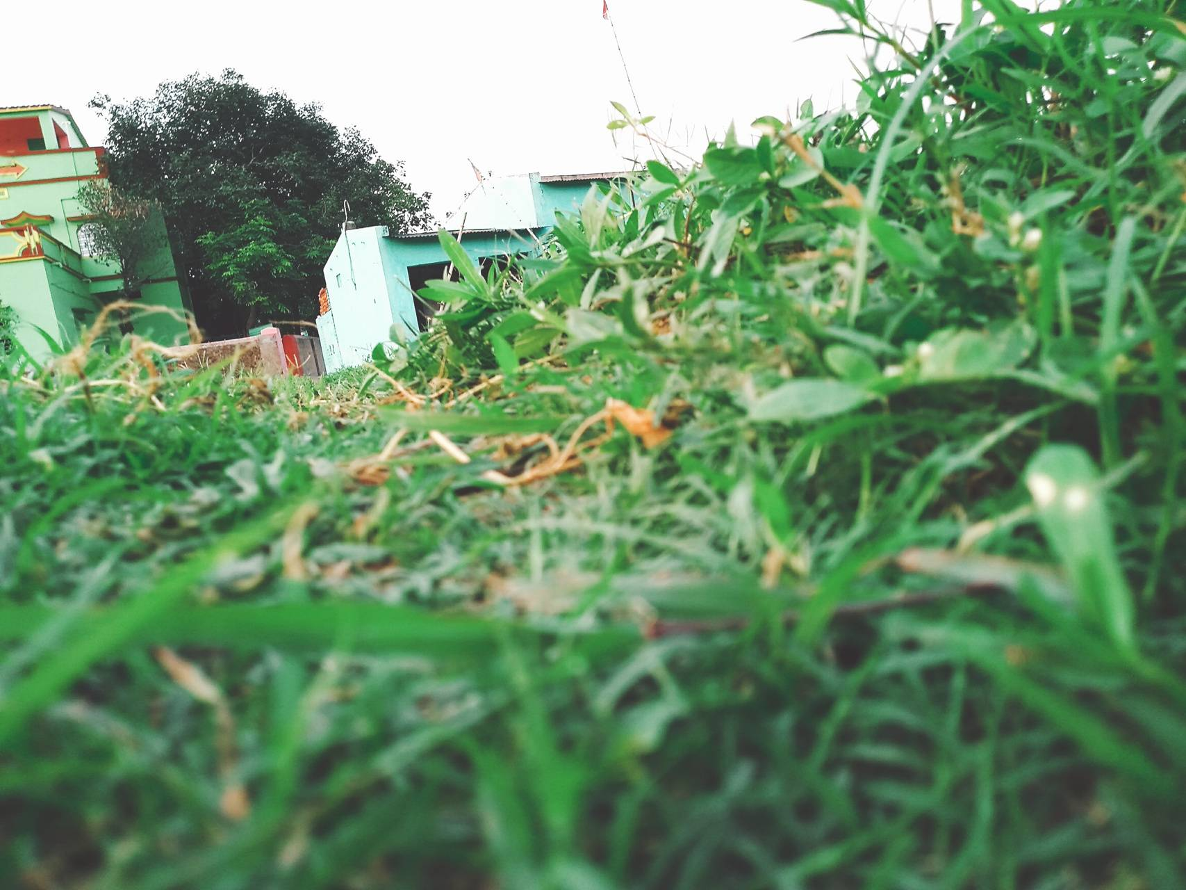 grass with house