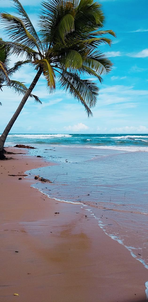Praia de busca vida
