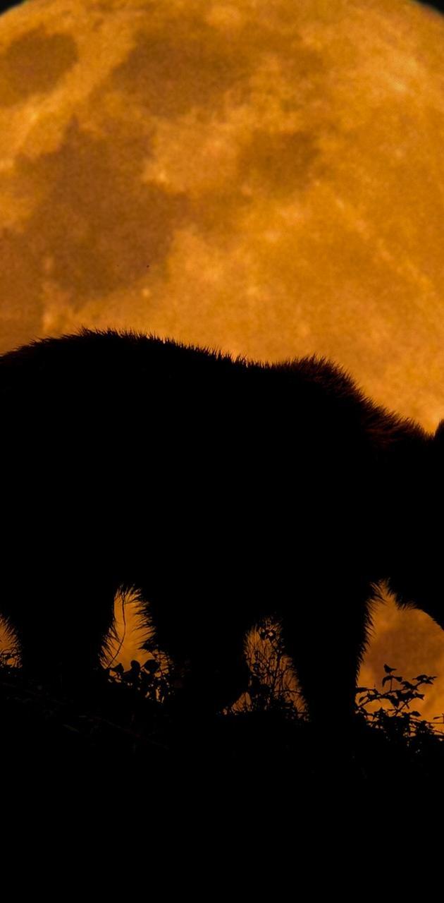 Bear and moon